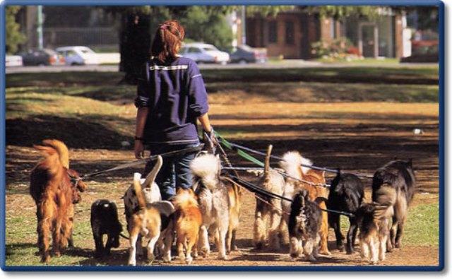 удачные Привлечение к ответственности за выгул собак тонком