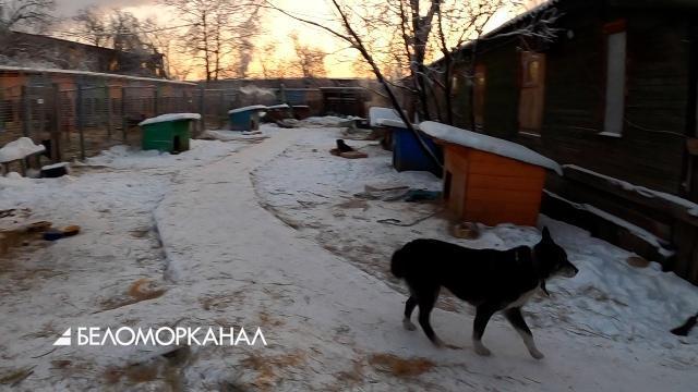 """Питомцам из приюта """"Четыре лапы"""" в Северодвинске в морозы помощь требуется особенно"""